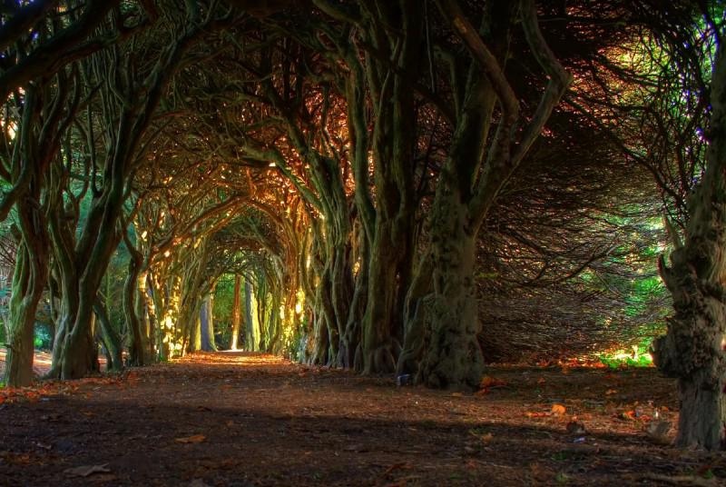 Fairytale tree tunnel by jacco55, All rights reserved
